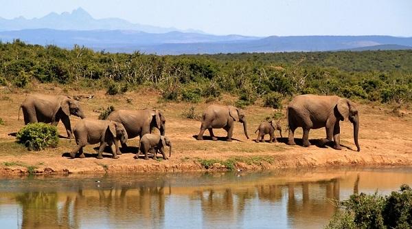 elephant-safari-afrique