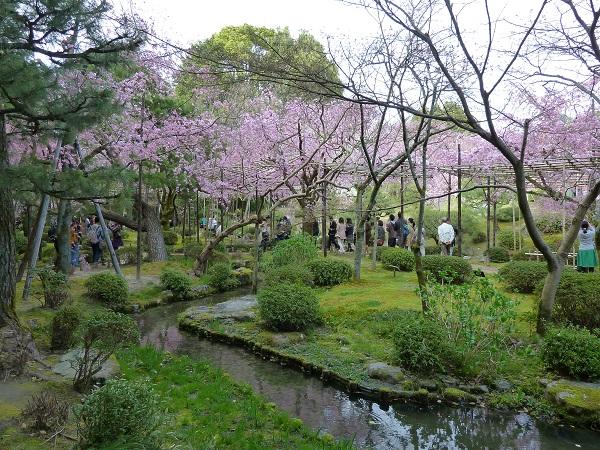 heian-jingu-sakura