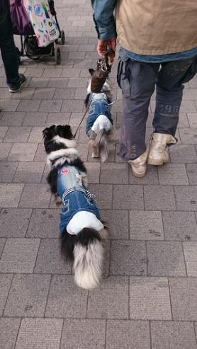 chien-habits