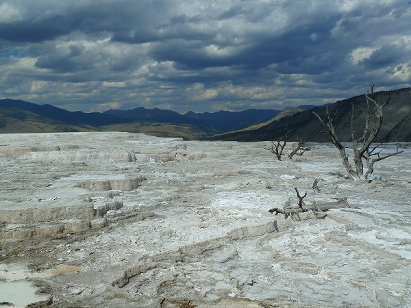 yellowstone-petrified-tree