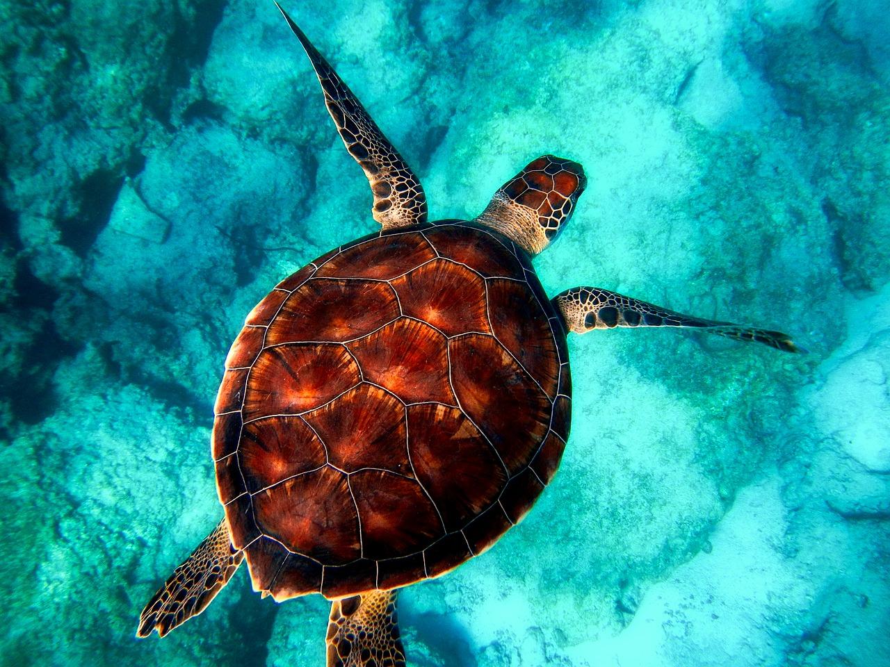 Plonger à Bali : Avis, conseils et budget